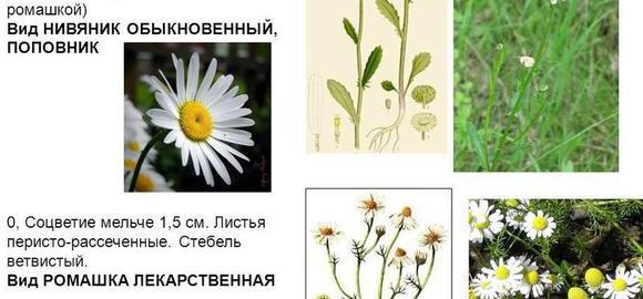 imagesbiologija-7-klass-gilkovanie-plastinki-lista-u-redki-thumb.jpg