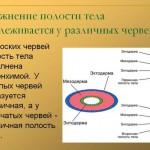 Вторичная полость тела