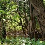 Экваториальные влажные леса