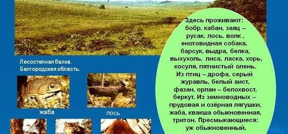 imageskakie-podzony-vydeljajutsja-vnutri-zony-lesov-8-klass-thumb.jpg