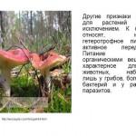 Животный мир как часть биосферы. Виды животных.