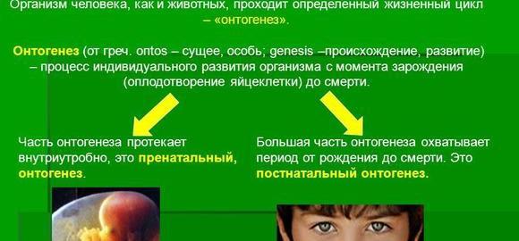 imagesnauka-izuchajuschaja-razvitie-organizma-ot-oplodotvorenija-do-rogdenija-thumb.jpg