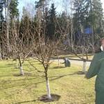 Весеннее опрыскивание деревьев