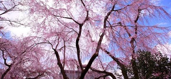 imagesono-s-vudard-u-sintoizm-drevnjaja-religija-japonii-thumb.jpg