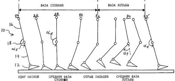 imagesperiody-i-fazy-dvigatelnyh-tsiklov-hodby-i-bega-thumb.jpg