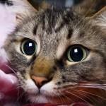 Разбираемся, почему у кошки текут слюни