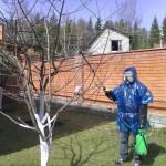 Применение медного купороса в саду и огороде