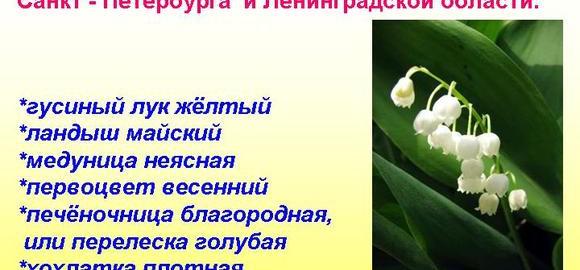 imagestsvety-iz-krasnoj-knigi-v-leningradskoj-oblasti-thumb.jpg