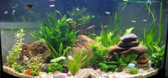 imagesv-akvariume-mutnaja-voda-pochemu-thumb.jpg
