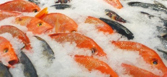 К чему снится много замороженной рыбы женщине